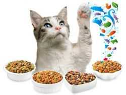 Какой деликатес выбрать для своей кошки сегодня