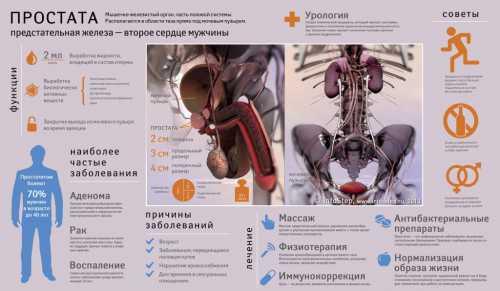 Симптомы и лечение: заболевания простаты
