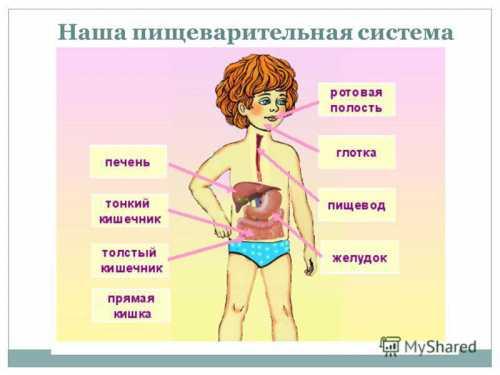 В том случае, когда желудок болит и человек знает о своем заболевании, помочь можно оказать самостоятельно уже известным и опробованным способом