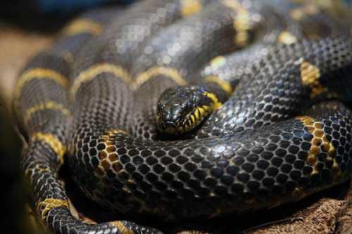 К чему снится убить змею: толкование сна про