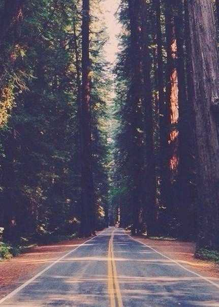 Цитаты и мысли: Наша дорога