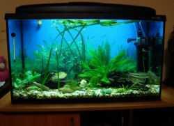 Фильтры для аквариума: какой лучше